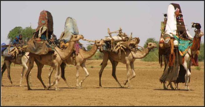 المنظمة العربية و الفاو تتبنيان مشروعاً ضخماً لتنمية دارفور