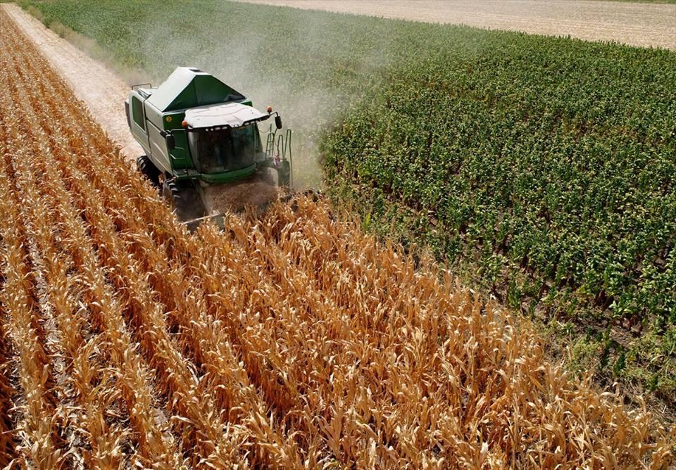 أسعار الذرة بسوق القضارف
