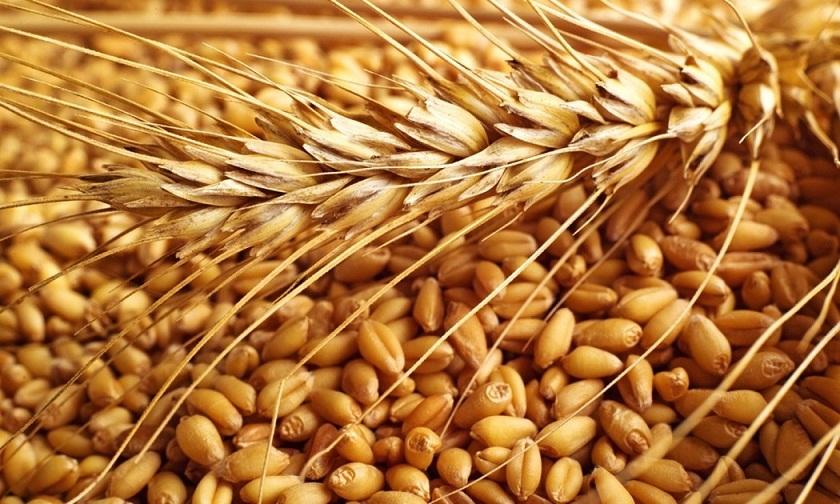 الإنتقالي : توفير حاجة البلاد من القمح والوقود حتى نهاية العام