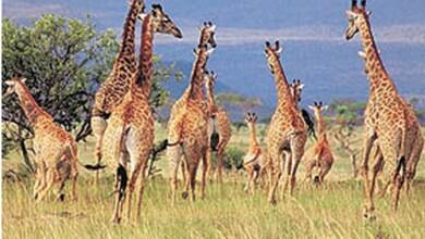 صورة وزارة السياحة: التنمية المستدامة والتسامح الانساني شروط اساسية لازدهار اقتصاد السياحة
