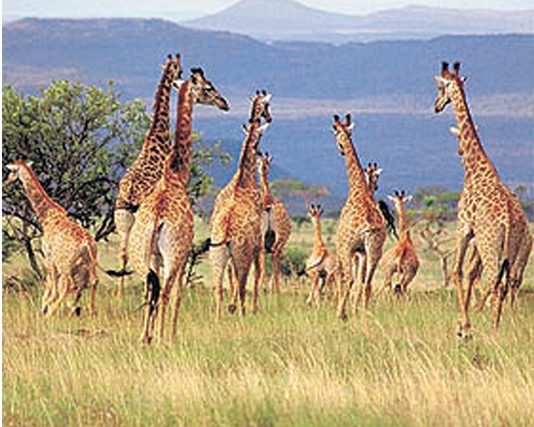 وزارة السياحة: التنمية المستدامة والتسامح الانساني شروط اساسية لازدهار اقتصاد السياحة