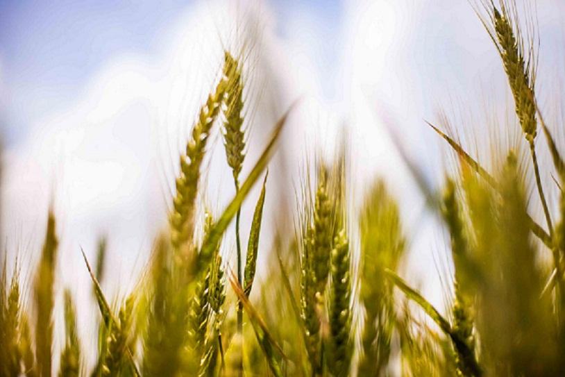 الدول العربية تتناول همومها الزراعية وسبل الأمن الغذائي بالخرطوم