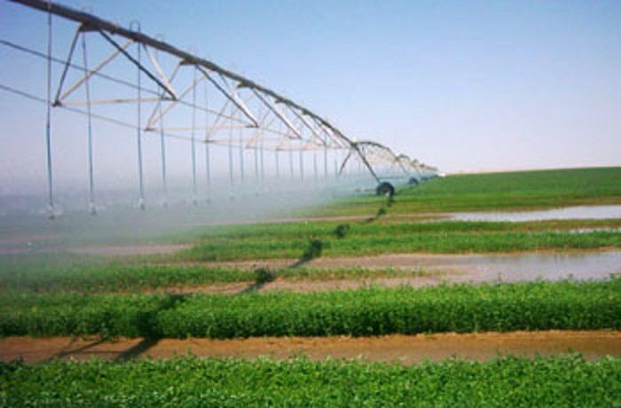 الري تشدد على الالتزام بالدورة الزراعية في الموسم الشتوي