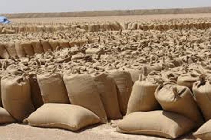 ارتفاع أسعار الذرة في المحليات الشمالية بكسلا