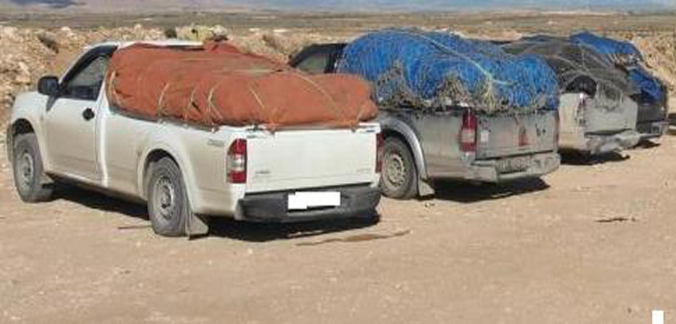 ضبط (13) عربة لوري تحمل بضائع مهربة إلى خارج البلاد