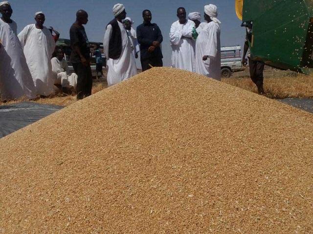 السودان هل يمزق فاتورة استيراد القمح هذا العام!!