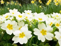 وزير الزراعة يفتتح مهرجان زهور الخريف السنوي