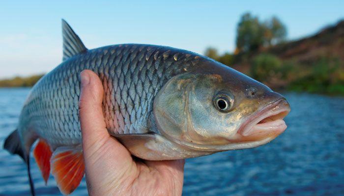 وكيل وزارة الثروة الحيوانية يجدد التزامه نحو زيادة الكمية النوعية للمنتجات السمكية