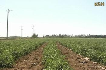 زراعة أكثر ٣ ملايين فدان بالنيل الأبيض