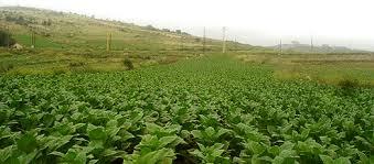 الزراعة تعلن (80) ألف فدان من المحاصيل و إكتمال الترتيبات للموسم الزراعي الشتوي