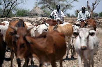 أحداث دامية بشمال دارفور خلفت ضحايا ومصابين