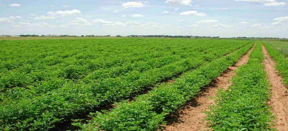 استيراد آليات زراعية بقيمة 15 مليون دولار لمشروع الرهد