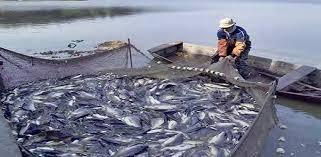 إدارة المصائد البحرية: الأسماك السودانية تغزو السوق السعودي