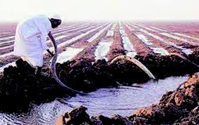 الري: ضرورة الالتزام بالدورة الزراعية للموسم الشتوي