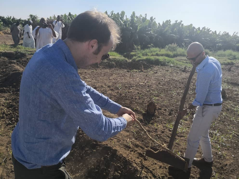 """بالصور : في مشهد رائع السفير البريطاني يمسك """"بالواسوق"""" في إحدى مزارع قرى السودان الوادعة"""