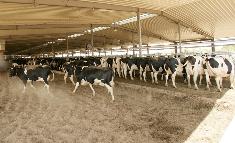 تدريب لمرشدي الإتصال على برنامج تسويق الماشية بشمال كردفان