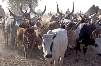 ( 9) ملايين يورو تمويل أوروبي  للمسح الوبائي للحيوان
