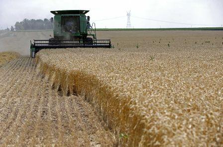 تأمين السيولة النقدية لمحصول القمح بالجزيرة