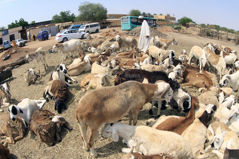 سكان الكلاكلة يطردون بائعي الخراف من المنطقة