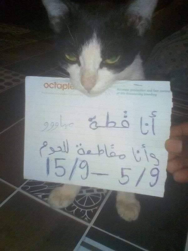 """شاهد الصورة الأكثر تداولاً.. """"قطة"""" سودانية تساند الشعب وترفع لافتة تعلن فيها مقاطعتها لأكل اللحوم"""