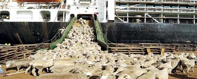 اجتماع بالقصر يناقش معالجة قرار إيقاف صادرات الماشية