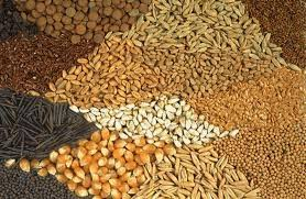 توقف صادر الحبوب الزيتية
