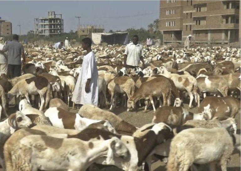 Photo of إنجلاء الأزمة ..استئناف شحن صادر الماشية